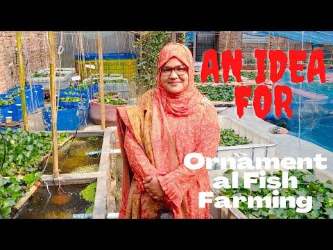 Ornamental Fish Farming - How To Culture Color Fish?