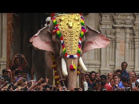 Thechikottukavu Ramachandran Oppen Thekke Nada | Thrissur Pooram 2017