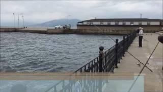 Mudanya da Dev Karagöz ve Kefaller,Güzel Balık Avı