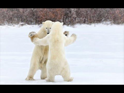 """Песенка про медведей"" на английском (Song About Bears)"