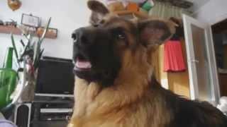 Прикольная реакция собаки на телевизор