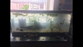 Setting up and planting first classroom tank! Unboxing plants from aquarium coop!