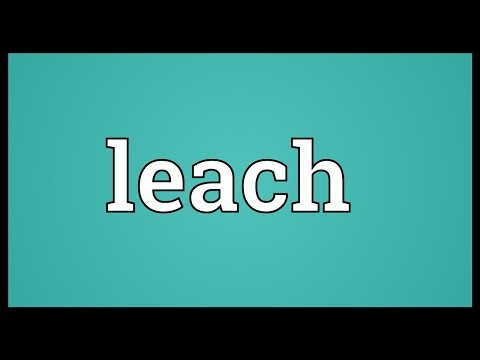 Leach Meaning
