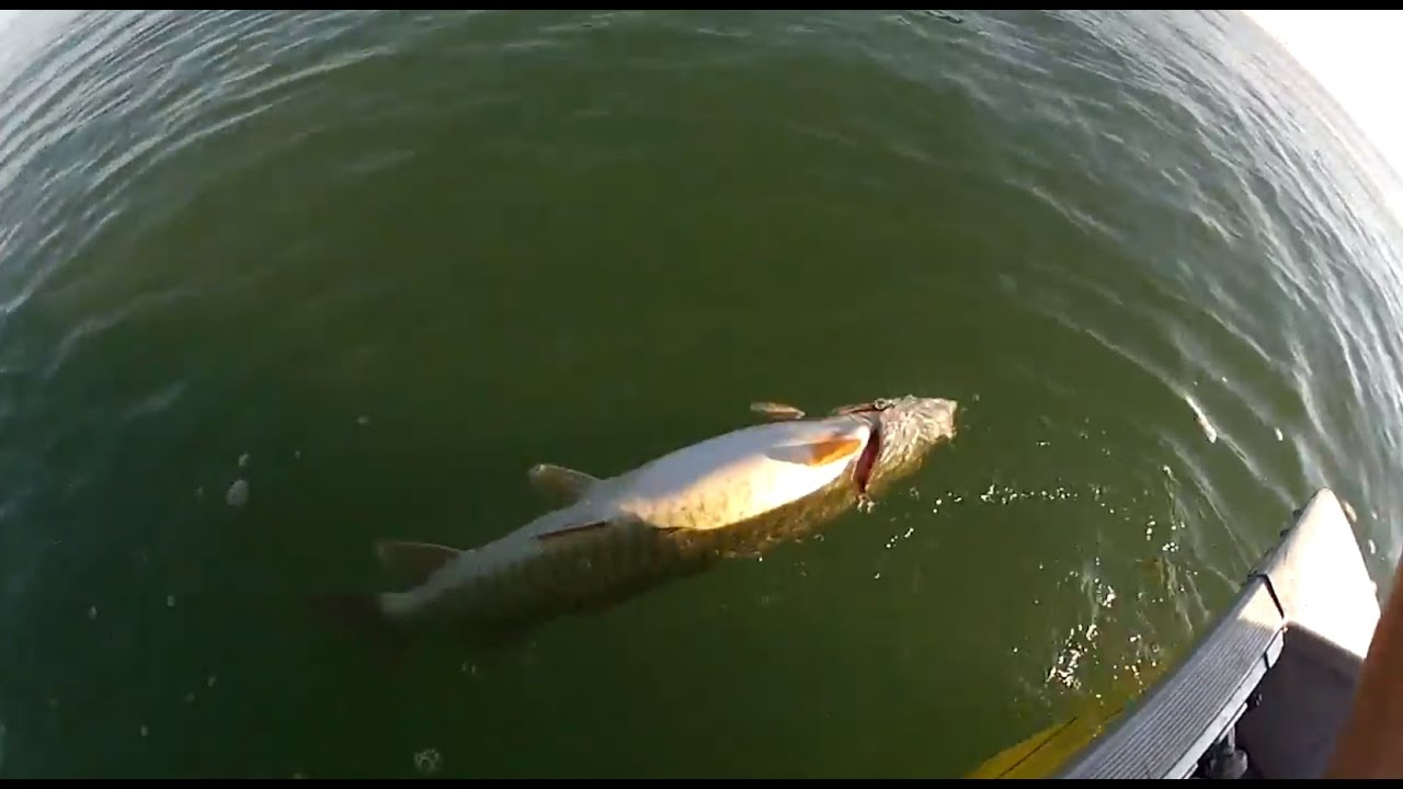 Catch and release: Catfish guy won't face charges in Pittsburgh