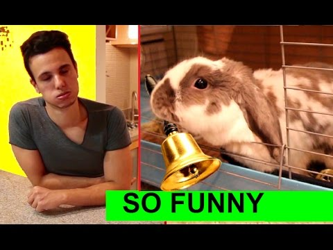 owner-regrets-teaching-his-rabbit-this-new-trick