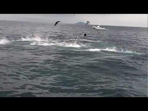 Panama Fishing - Tuna Frenzy At Hannibal Bank!