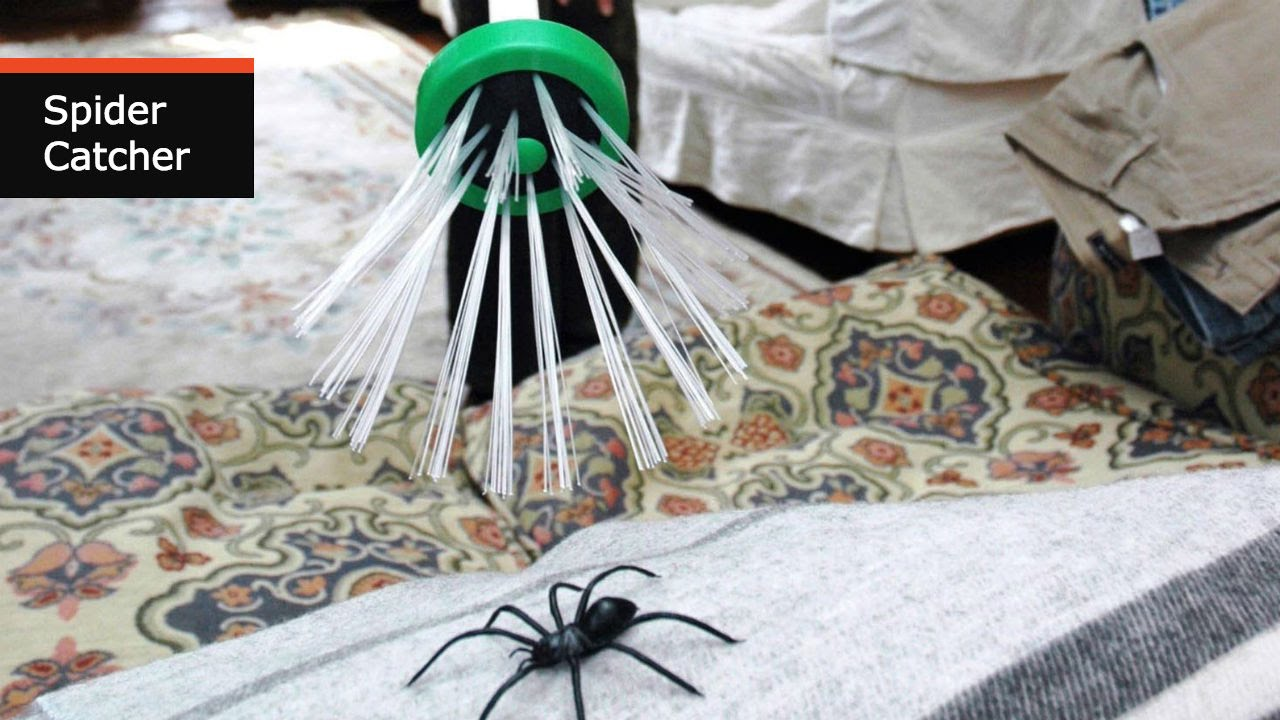 Spider Catcher Traps Insects Safely & Humanely