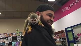 Squirrel monkey chicko at pets at home #chicothemonkey