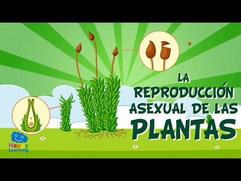 Lombrices californianas reproduccion asexual de las plantas