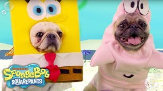 SpongeBob & Patrick's Best BFF Moments 🐾 Pug-House Style | Nick