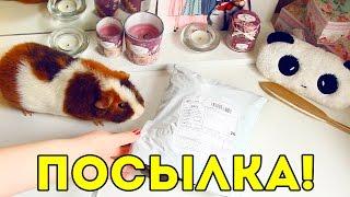 Распаковка Посылки с Aliexpress для Морских Свинок / Свинки Шоу / SvinkiShow
