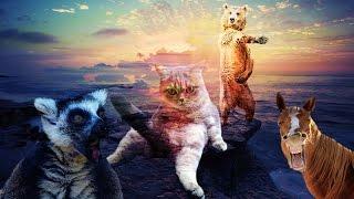 Top 5 remixów: Śpiewające zwierzęta! █▬█ █ ▀█▀