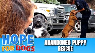 Hope For Paws Rescue Abandoned Puppies & Mama From Street