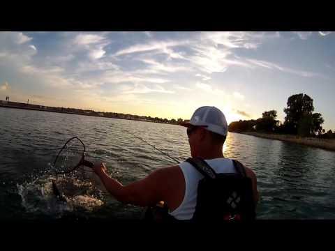 Steelhead In Waukegan Harbor. From A Kayak!