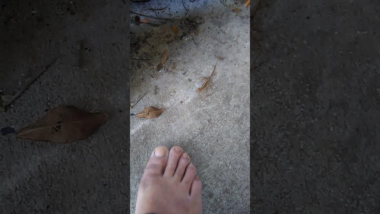 Lizard On Foot Youtube