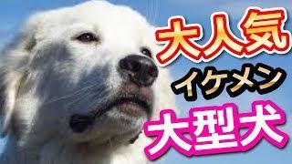 犬の種類は数多いですが、その中でもたくましい体を持ち、一緒にスポー...