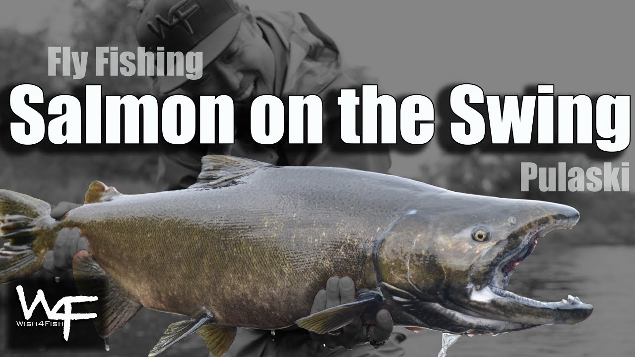 W4f fly fishing salmon on the swing salmon river for Best time for salmon fishing in pulaski ny