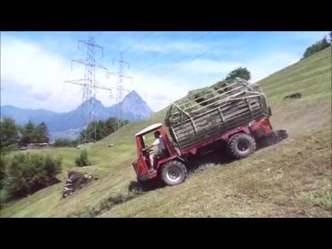 Reform Muli Sommer 2018 Farming in Switzerland