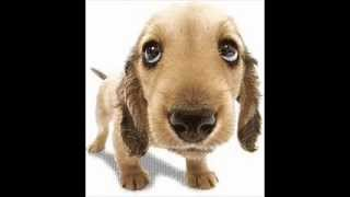 Toques para celular: Cachorro chorando