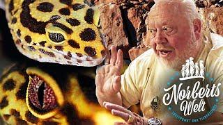 SCHWANZ REISST AB! | Der LEOPARDGECKO oder Leopardengecko? | Norberts Welt | Zoo Zajac