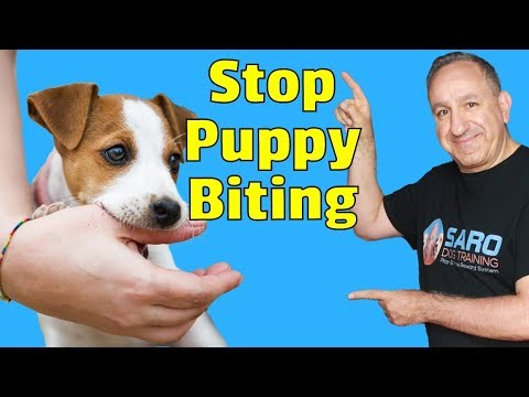 how-to-stop-puppy-from-biting-and-nipping