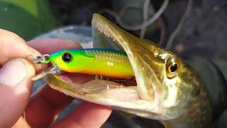 Рыбалка Рыбалка осенью Ловля на спиннинг Обзор воблеров TsuYoki Comma TsuYoki Watson TsuYoki Rodger