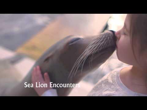 Blue Reef Aquarium, Tynemouth TV Advert 2014