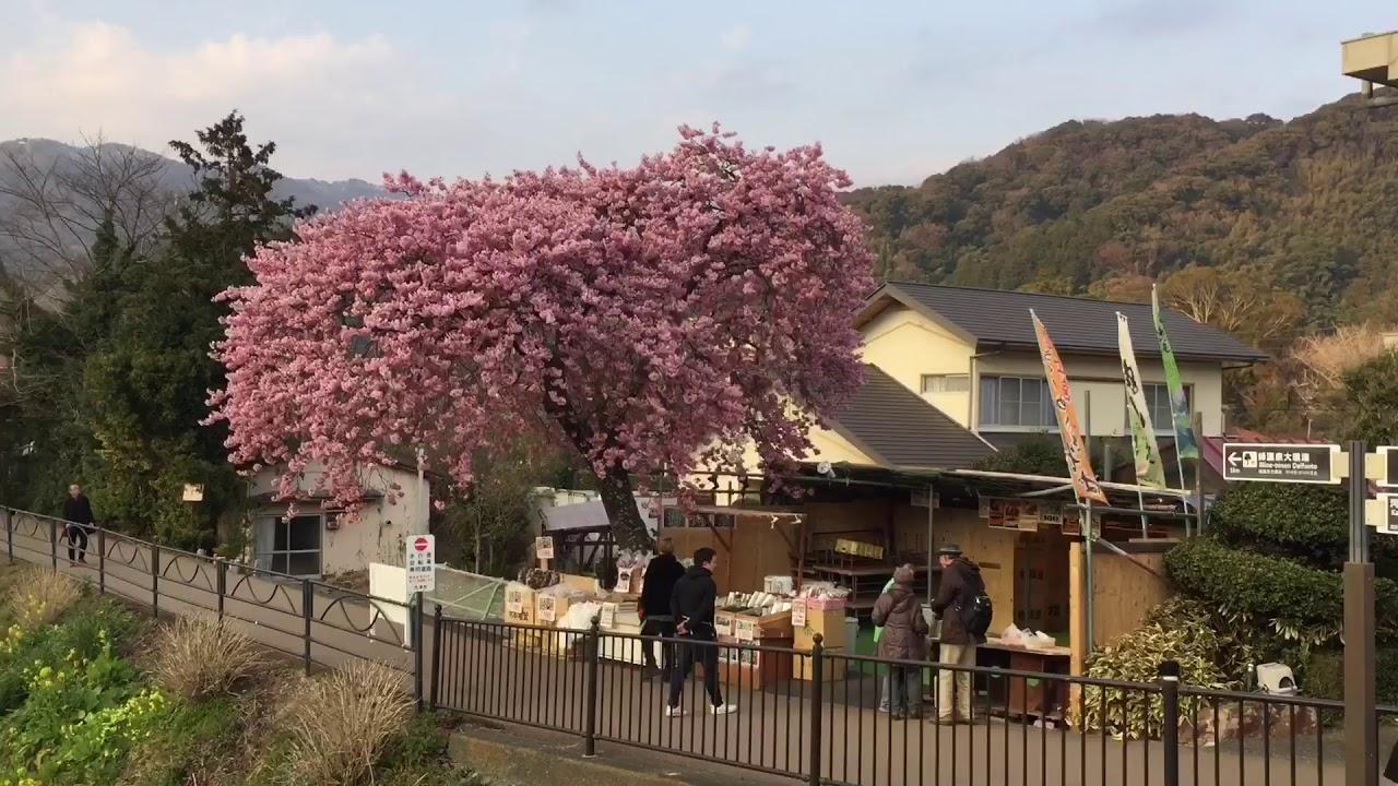 Япония видео еко акахари, трах на улице ретро