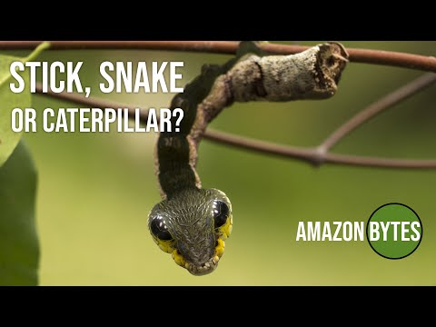 Stick, Snake or caterpillar?