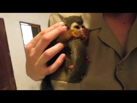 Jones and Company - Rescued Squirrel Monkey Is Sung to Sleep