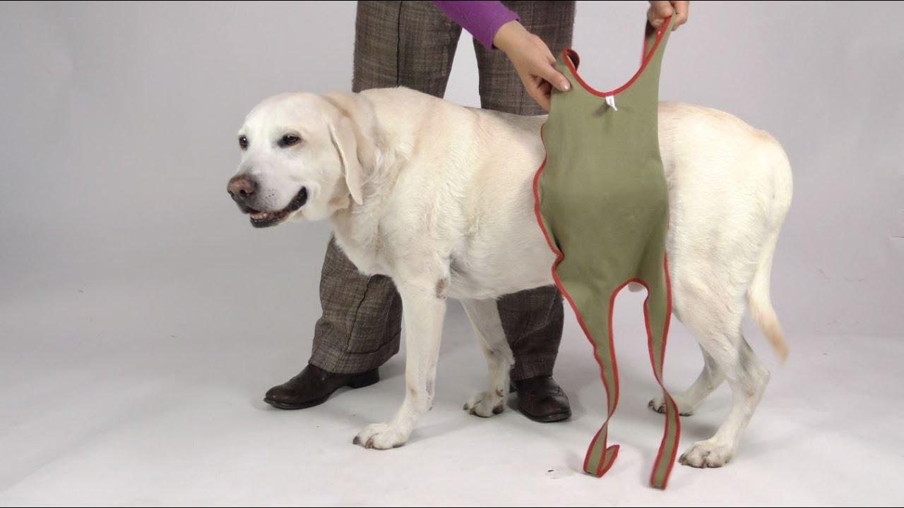 D monstration vid o de la grande couche pour chien m le youtube - Couche pour chien femelle ...