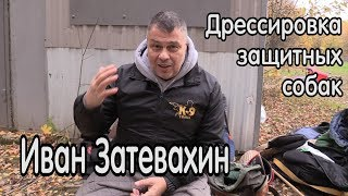 Иван Затевахин о дрессировке и разведении защитных собак