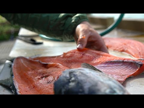 Alaskan Catch and Cook - BEST TASTING FISH