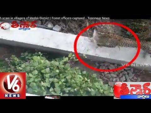 Cheetah Gives Tough Time To Medak Dist Villagers   Teenmaar News   V6 News