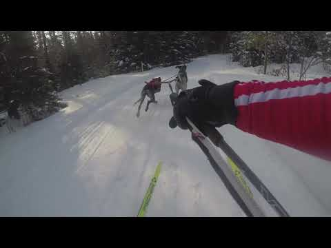 2019 Three Bear Sled Dog Race Full Skijor Video