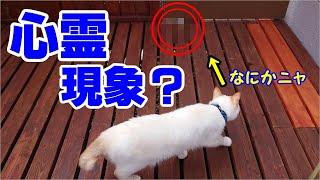 【心霊現象?】猫と屋外で遊んでいたら白くて丸い奇妙な物が突然に現れた!