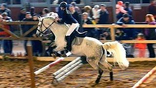 Красивые Лошади. Верховая Езда. Прыжки Через Препятствия В Замедленной Съемке