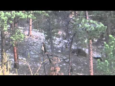 Mule Deer - 04.27.13
