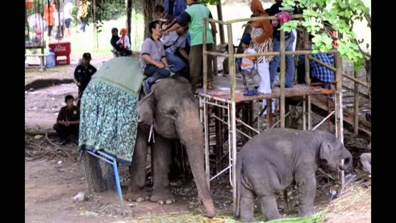 Taman Satwa Taru Jurug Jawa Tengah Tempat Wisata Di Indonesia Youtube