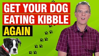 Dog Won't Eat Kibble (How to Solve The Problem)