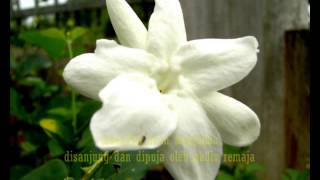 Bunga Melur...  - P.Ramlee