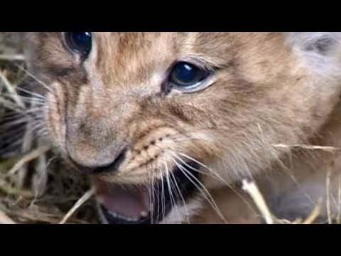 Animal Park - Lion Cub Injections & Marmosets | Safari Park Documentary | Natural History Channel