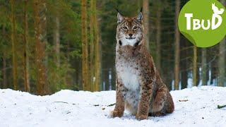Wilderer (Folge 64) | Tiere bis unters Dach | SWR Kindernetz
