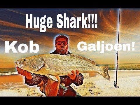 ZLF Fishing De Hoop Part 3 | Galjoen, Kob & Huge Shark Action!