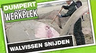 Aangespoelde walvissen snijden | DFJW | DumpertTV