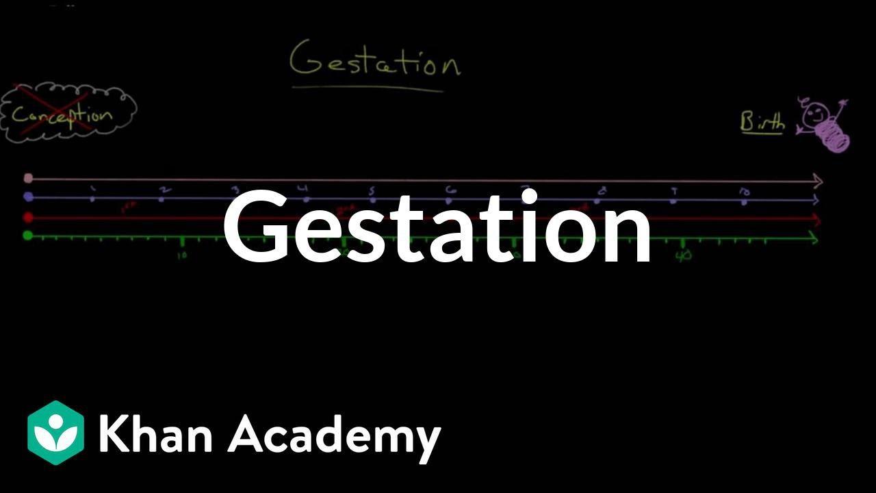 Gestation (video) | Embryology | Khan Academy