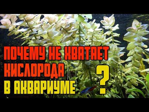 Почему рыбы у поверхности аквариума?   Почему рыбам не хватает кислорода   Нитриты в аквариуме (#68)