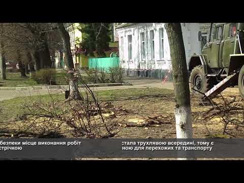 Телеканал АНТЕНА: Біля черкаської Станції швидкої допомоги обрізають аварійні дерева