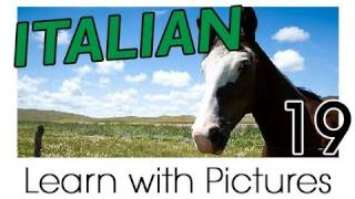 Learn Italian - Italian Farm Animals Vocabulary