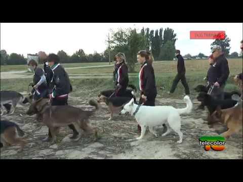 Dog Training - Allenamento cinofili Parco Le Vincellate - 12.11.2016 - 2^ puntata